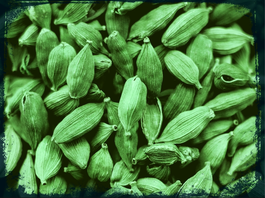 cardamom-mtswriting-blog-post