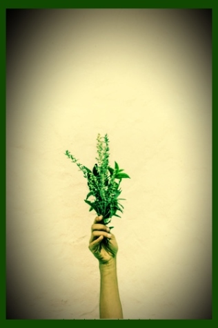 hand_holding_herbs