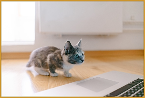 kitten_looking_at_a_laptop